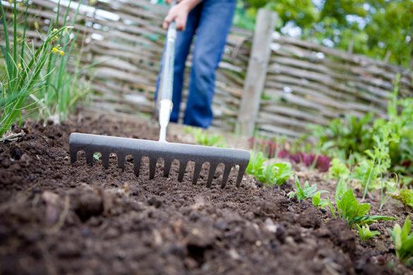5 haveredskaber du skal eje
