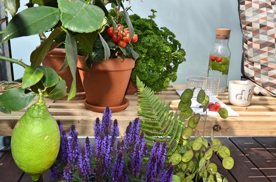 Skab en duftende oase med blomster og krydderurter