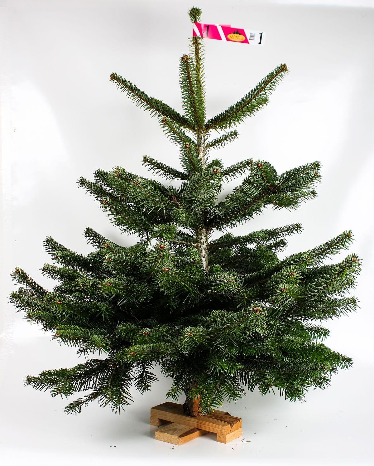 Alt om juletræet