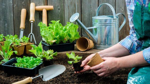dyrk økologiske grøntsager i din køkkenhave